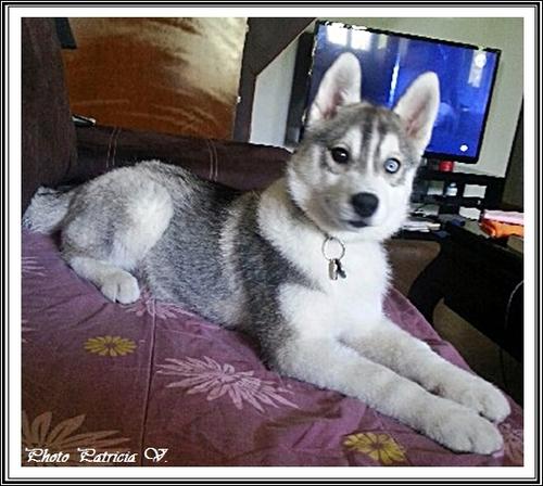 Inouk (3,5 mois)