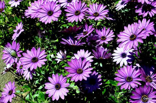 Le Barcarès: des fleurs dans mon jardin