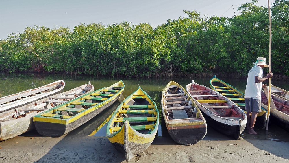 demain nous ferons un tour en pirogues dans la mangrove de la Boquilla 17/2