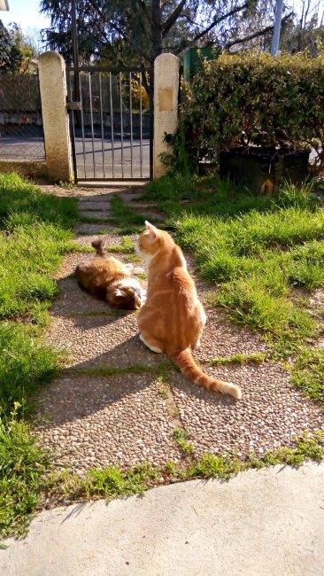 Dimanche Cat au soleil