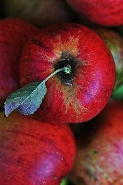 Gelée de pommes