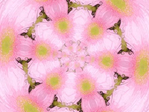 Rosace.Copie de 20100809 288