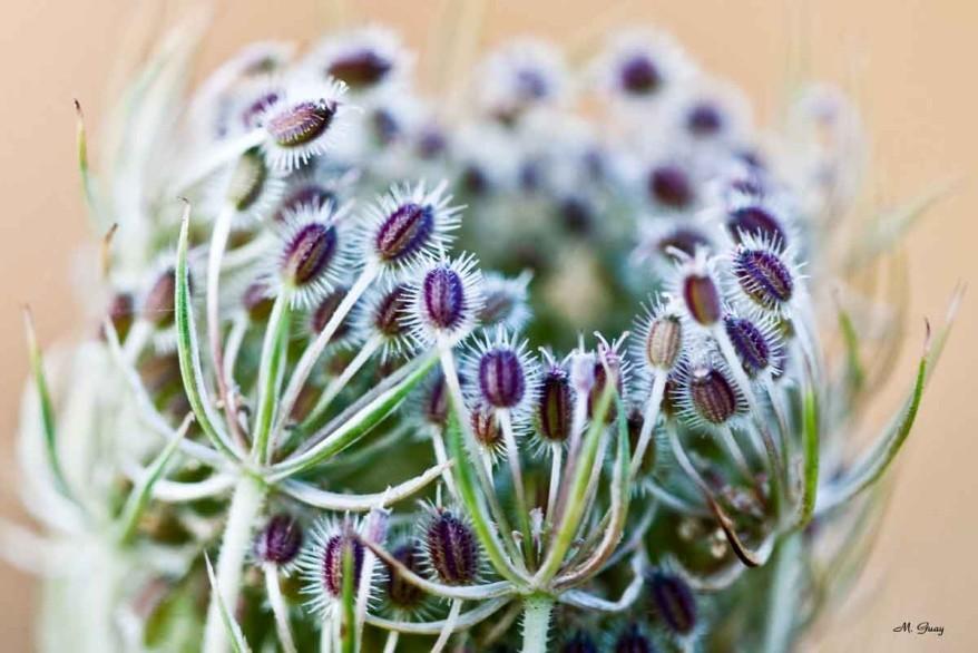 fleur-en-zoom-8891.jpg
