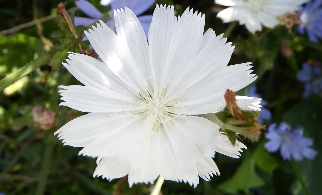 des fleurs de cet été