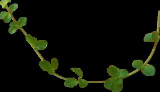 Sweet Flower d'Angie Design sur gaze des soie fini