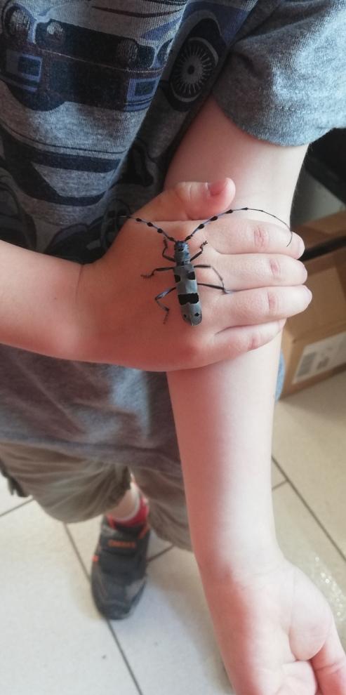 Petits insectes à l'école