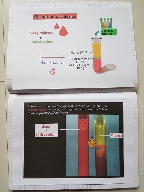Le sang plus en détails