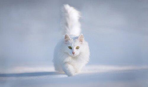 Animaux blancs
