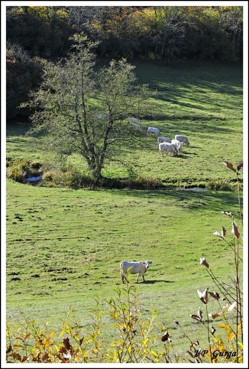 Des paysages Châtillonnais photographiés par Jean-Pierre Gurga...