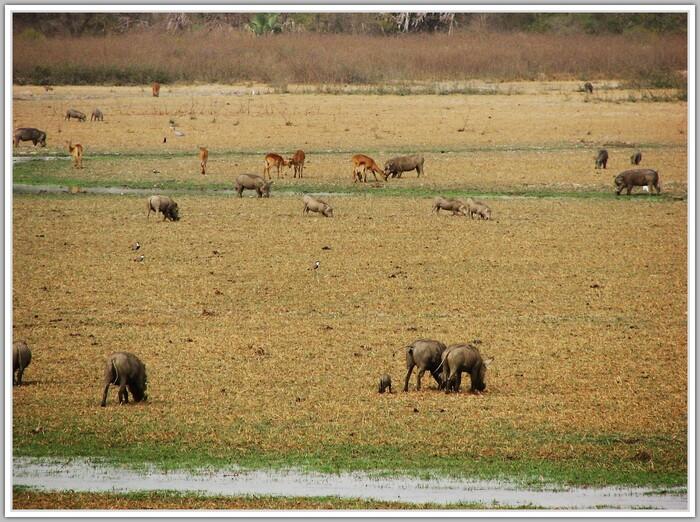 NIOKOLO KOBA réserve Sénégal