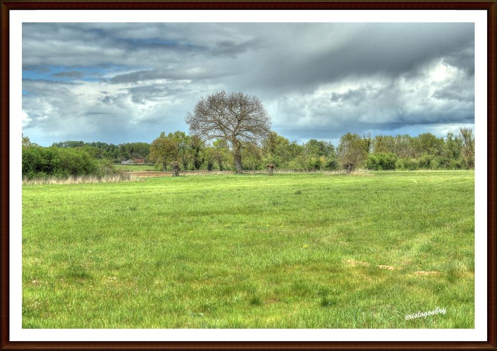 Dans la prairie...