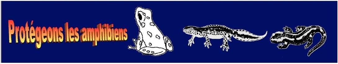 L'évolution de têtards de Grenouille rousse