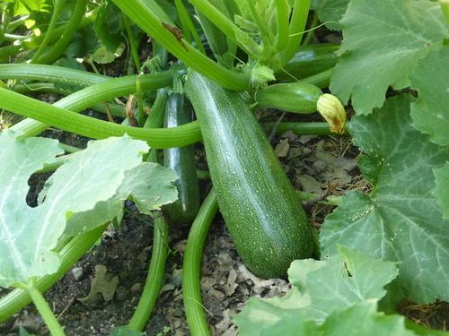 - 8 et 9/7 : tout un week-end au jardin ! -