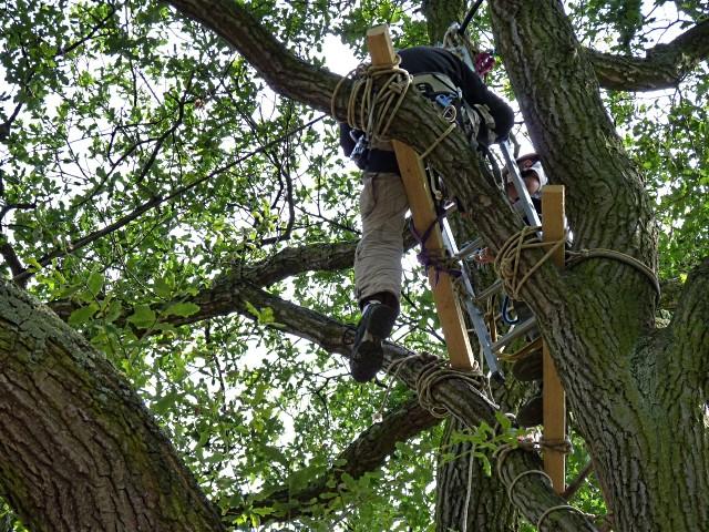 Parcours dans les arbres 5 Metz mp1357 2011