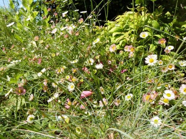 le-dallage-fleur---juin-2014---au-ras-du-sol.jpg