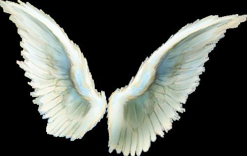 """Thème : Les ailes - Tubes ailes """"oiseaux"""""""