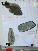 """Sixième exposé """"Les minéraux et les fossiles"""""""
