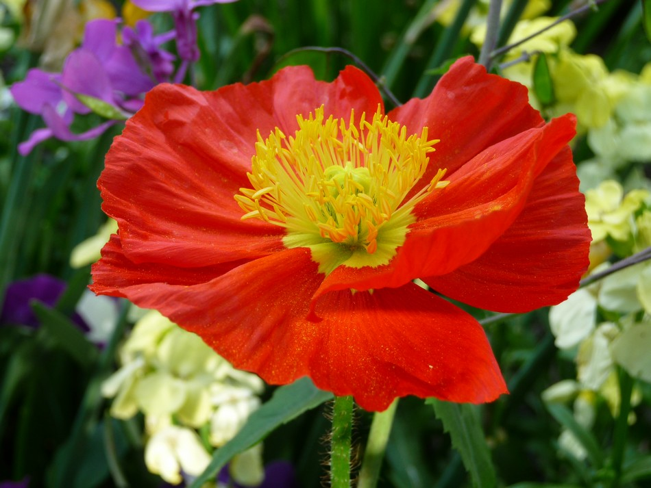 A deux, ou seule, mes fleurs amiénoises