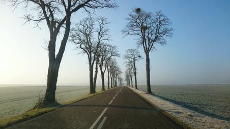 L'image contient peut-être: arbre, ciel, plein air et nature