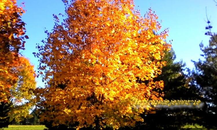 chance de profiter à l'automne d'un micro-climat en raison de la proximité du Ciron et de la Garonne. ... est entourée par 10 des premiers crus classés de l'appellation sauternes