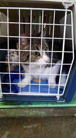 Wolu1200 : Ce petit chat recherche de toute urgence une famille aimante