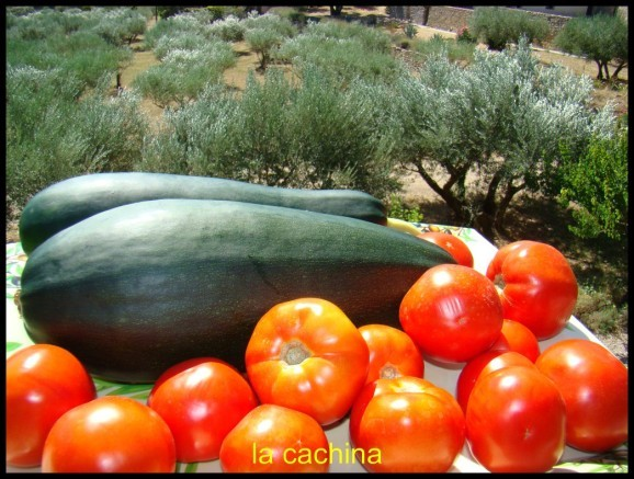 courgettes--geante--15-.JPG