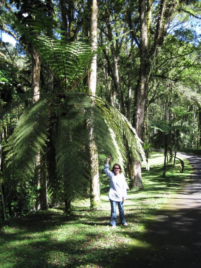 Les géants du jardin botanique de Bali