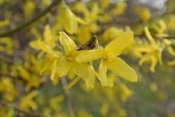 fleurs de printemps...