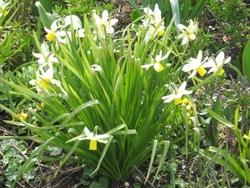 Mardi 11 avril : dans le jardin de Claude Monet