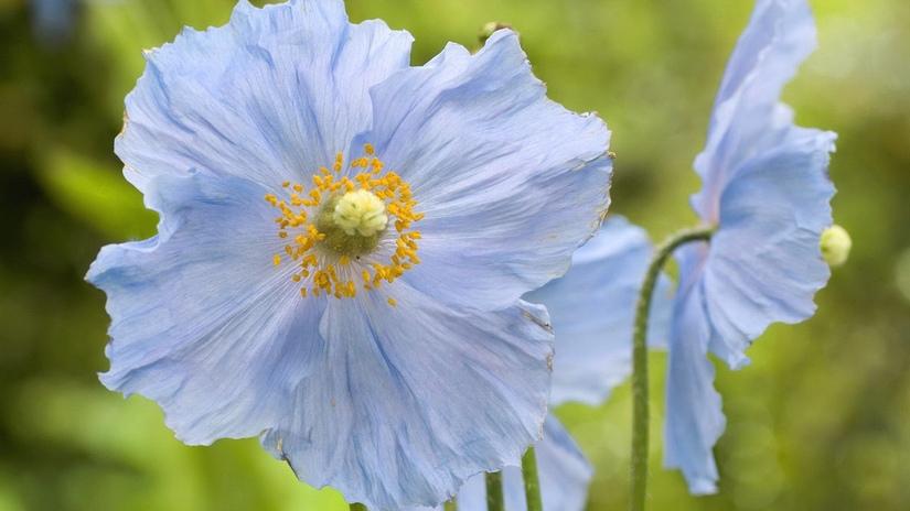 5 images de fleurs