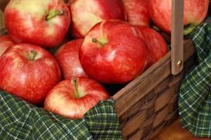 La pomme, aliment santé par excellence