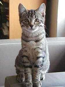 petit-dernier-famille-avez-chat-gouttiere 35649