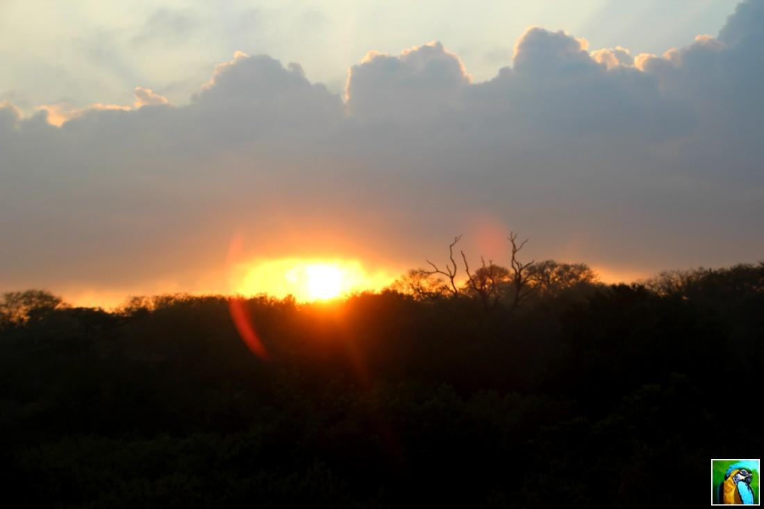 Afrique du Sud : juin 2018 Safari du matin 1/4