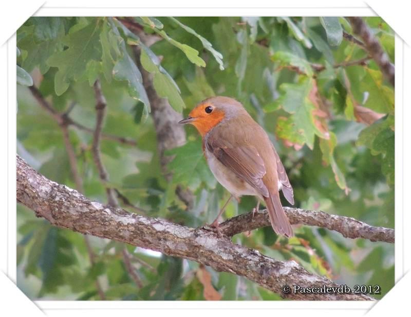 Visite à la réserve ornithologique du Teich - 8/8