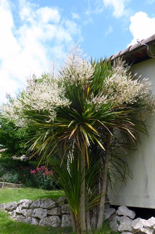 Un belle plante !