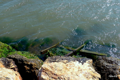 Promenade au bord du lac marin de Salses (5)