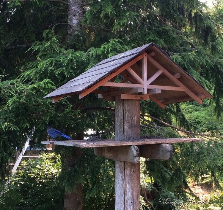 Nouvelles du Canada 160 : La propriété de mes amis