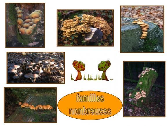 http://lancien.cowblog.fr/images/Fleurs4/Diapositive14.jpg