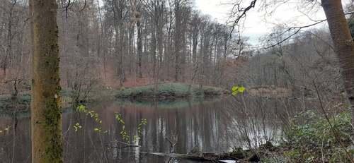 Promenade en forêt de Soignes