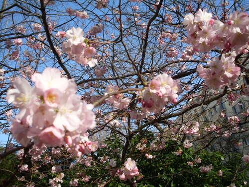 le printemps au Japon