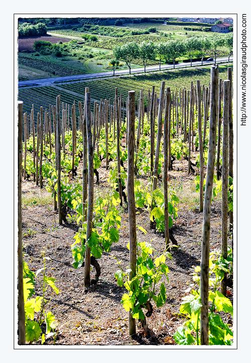 Vignoble de Cornas - Vallée du Rhône