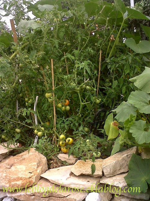 Tomates en pagaille/Tomatoes