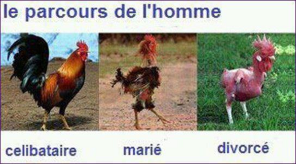 pauvres hommes    lol