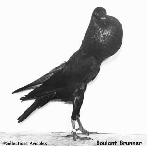 Boulant Brunner
