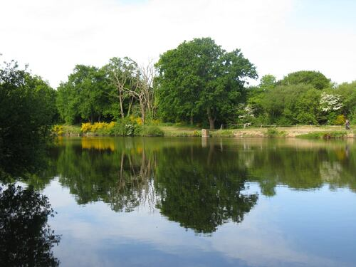 Le long de l'étang...