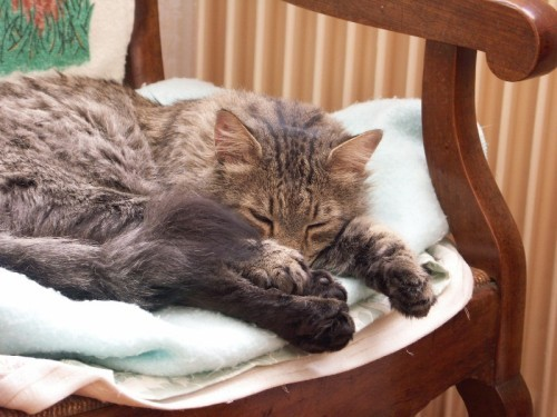Colibri dort dans le fauteuil