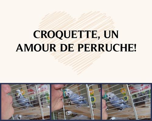 Un amour de Croquette