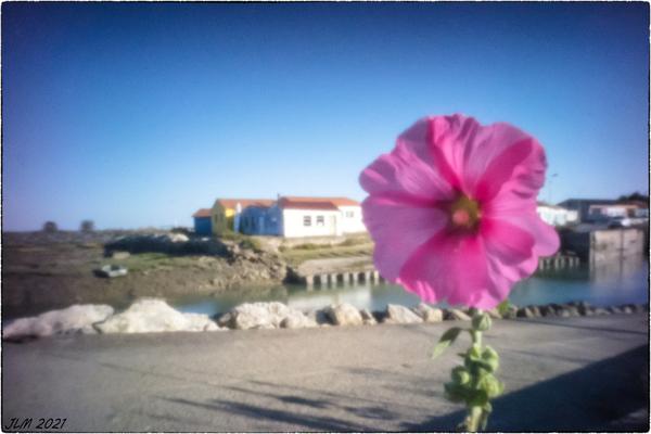 regarder pousser les Fleurs (expérience photographique N°28)