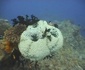 Plongee-Mickaelmas-Cay-0--91-.jpg