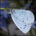 - Papillon de jour -